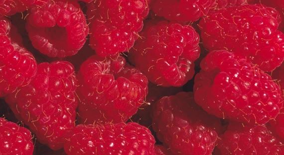 JBT_berries_generic