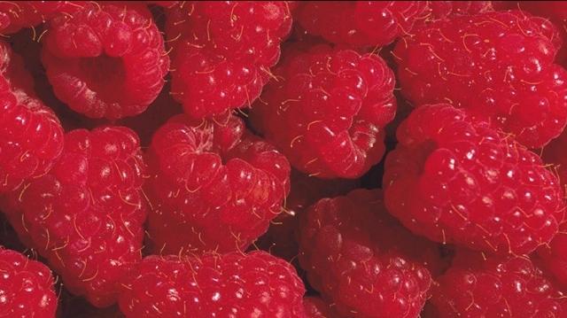 jbt_berries-1.jpg